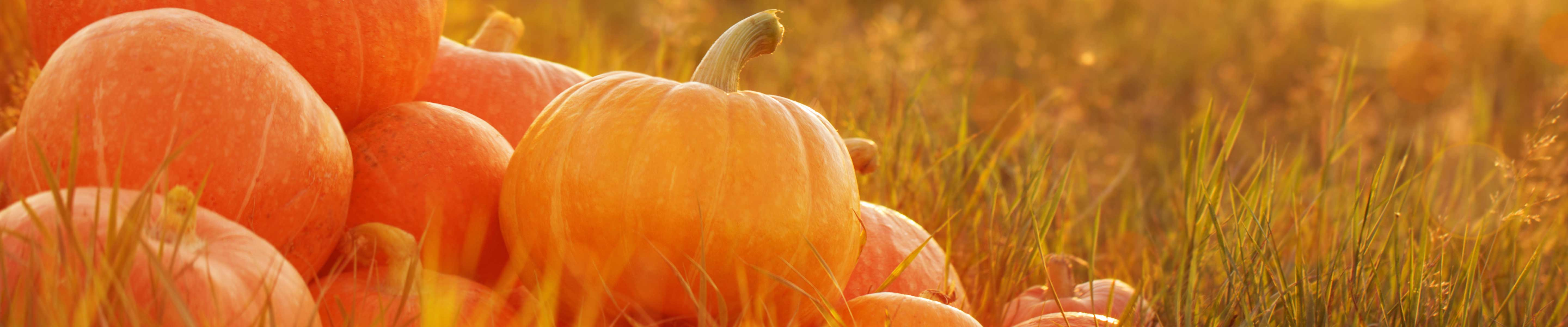 Pumpkins in the autumn - get outdoors this Halloween!